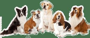 assurance pour chien belgique