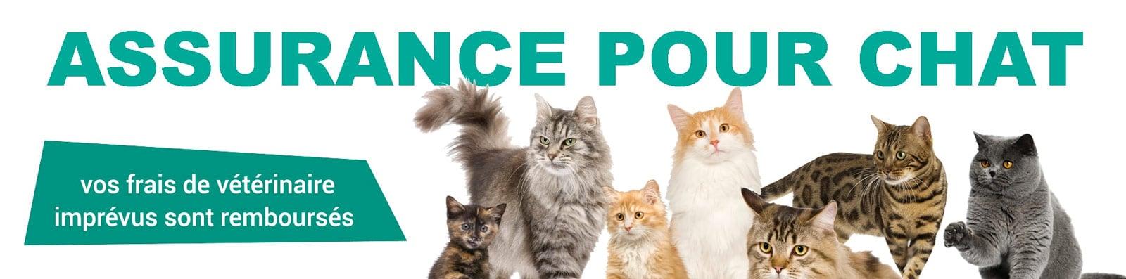 assurance-pour-chat
