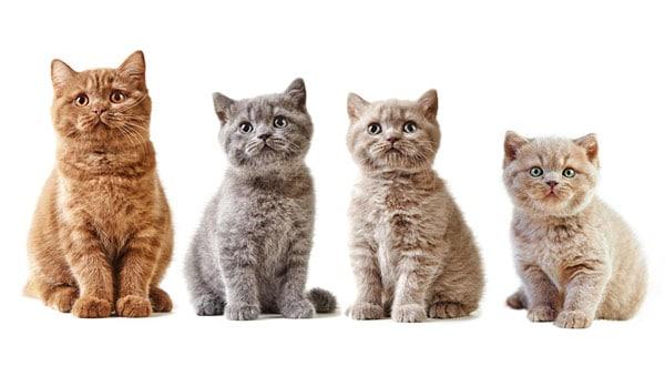 assurance-pour-chat-belgique
